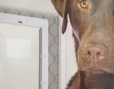 Dog Doors For Screens Melbourne Pet Doors
