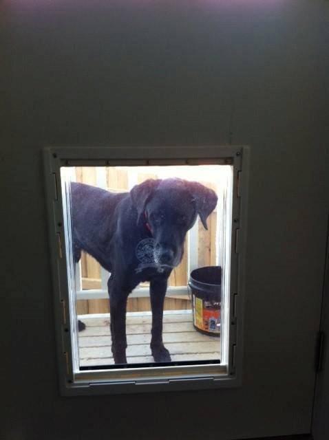 Large Dog Door For Wood Supplied Installed Melbourne Pet Doors